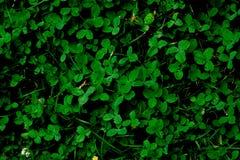 Fondo de la textura del fondo de la hierba verde foto de archivo