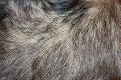 Fondo de la textura del pelo del perrito del perro Rubio con el pelo oscuro Pelo del brillo Modelos inconsútiles foto de archivo libre de regalías