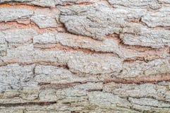 Fondo de la textura del pino de Brown Fotografía de archivo libre de regalías