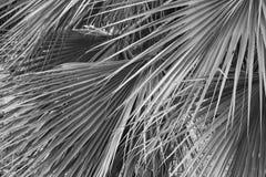 Fondo de la textura del verde de las hojas de palma Imagen de archivo libre de regalías