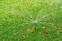 Fondo de la textura de las hojas del verde de la palma de señora Foto de archivo libre de regalías