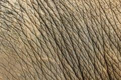 Fondo de la textura de la piel del elefante foto de archivo libre de regalías