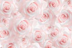 Fondo de la variedad de capullos de rosa rosados wallpaper Sombras en colores pastel fotografía de archivo libre de regalías