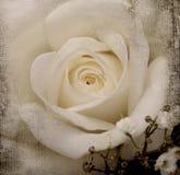 Fondo de la vendimia con la flor Foto de archivo