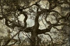 Fondo de la vendimia de la ramificación de árbol fotos de archivo libres de regalías