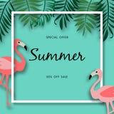 Fondo de la venta del verano con el pájaro hermoso del flamenco, plantilla del ejemplo del vector stock de ilustración