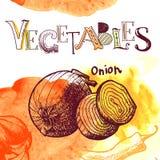 Fondo de la verdura del vector Fotografía de archivo libre de regalías