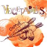 Fondo de la verdura del vector Imagen de archivo libre de regalías