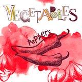 Fondo de la verdura del vector Fotografía de archivo