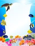 Fondo de la vida de mar Imagen de archivo libre de regalías
