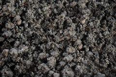 Fondo de la visión superior del suelo fértil para el crecimiento vegetal orgánico Imágenes de archivo libres de regalías