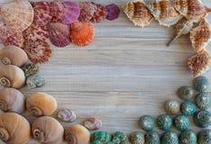 Fondo de las cáscaras coloridas del mar fotos de archivo libres de regalías