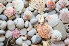 Fondo de las cáscaras del mar imágenes de archivo libres de regalías