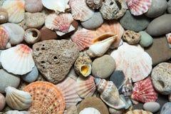 Fondo de las cáscaras del mar fotografía de archivo