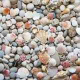 Fondo de las cáscaras del mar imagen de archivo libre de regalías