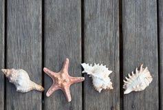 Fondo de las cáscaras del mar fotografía de archivo libre de regalías
