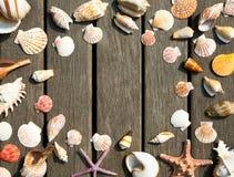 Fondo de las cáscaras del mar imagenes de archivo