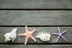 Fondo de las cáscaras del mar foto de archivo libre de regalías