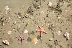 Fondo de las cáscaras del mar fotos de archivo