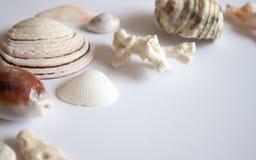 Fondo de las cáscaras y de los corales del mar fotografía de archivo