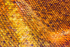 Fondo de las escalas de pescados del oro Fotografía de archivo