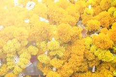 fondo de las flores amarillas que cuelgan en la casa del spirite en la prohibición Imagen de archivo libre de regalías