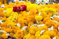 fondo de las flores amarillas que cuelgan en la casa del spirite en la prohibición Imagenes de archivo