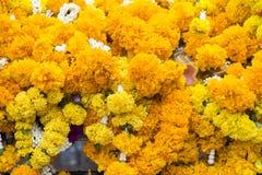 fondo de las flores amarillas que cuelgan en la casa del spirite en la prohibición Foto de archivo