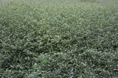Fondo de las flores blancas Imagen de archivo