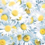 Fondo de las flores de las manzanillas Pintura de Digitaces Foto de archivo libre de regalías