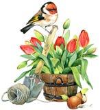 Fondo de las flores del pájaro y del jardín de la acuarela Foto de archivo