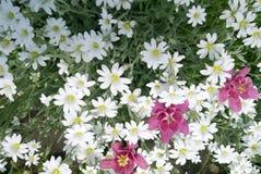 Fondo de las flores, floral hermoso foto de archivo
