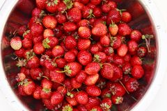 Fondo de las fresas recién cosechadas Imagen de archivo