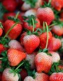 Fondo de las fresas recién cosechadas, directamente arriba Fotos de archivo libres de regalías