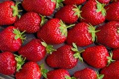 Fondo de las fresas recién cosechadas, directamente arriba Imagen de archivo libre de regalías