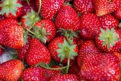 Fondo de las fresas recién cosechadas, directamente arriba Fotografía de archivo libre de regalías