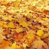 Fondo de las hojas amarillas Otoño imagenes de archivo