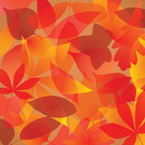 Fondo de las hojas de otoño Imagenes de archivo