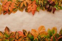 Fondo de las hojas de otoño imágenes de archivo libres de regalías