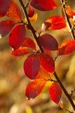Fondo de las hojas de otoño Imagen de archivo libre de regalías