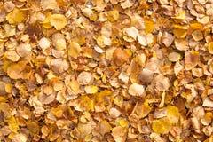 Fondo de las hojas de otoño amarillas Imagen de archivo