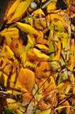 Fondo de las hojas de otoño caidas Foto de archivo libre de regalías