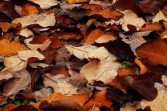 Fondo de las hojas de otoño de Brown Foto de archivo