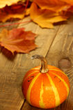 Fondo de las hojas de otoño de la calabaza de la acción de gracias Fotos de archivo libres de regalías