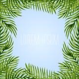 Fondo de las hojas de palma stock de ilustración