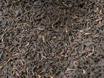Fondo de las hojas de té Foto de archivo libre de regalías