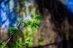 Fondo de las hojas del cielo azul y del verde foto de archivo