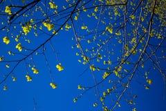 Fondo de las hojas del cielo azul y del verde Imagen de archivo