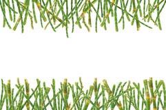 Fondo de las hojas del pino Fotografía de archivo libre de regalías