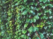 Fondo de las hojas del verde y de las ramas del marrón con la luz oscura natural, Fotos de archivo libres de regalías